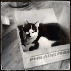Bella loves @freshdirect! ... freshdirect box