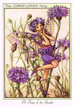 The Cornflower Fairy. Vintage flower fairy art by Cicely Mary Barker. Taken from 'Flower Fairies of the Garden'. Click through to the link to see the accompanying poem. Cicely Mary Barker, Flower Fairies, Fairies Garden, Fairy Pictures, Vintage Fairies, Beautiful Fairies, Fantasy Illustration, Garden Illustration, Fairy Art