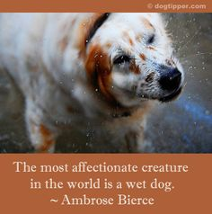 The most affectionate creature in the world is a wet dog. - Ambrose Bierce