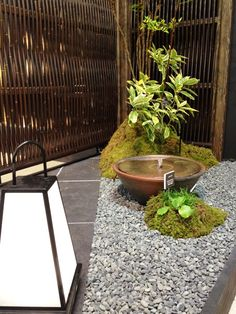 Astounding Top 5 Beautiful Indoor Small Zen Garden Designs for Interior Beauty Indoor garden is a garden that is made indoors at home. This garden is very important to support the aesthetics and cleanliness of the air in your hom. Indoor Zen Garden, Terrace Garden, Lawn And Garden, The Pleasure Garden, Small Japanese Garden, Patio Central, Zen Garden Design, Japan Garden, Minimalist Garden