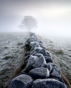 foggy landscape (favim.com)