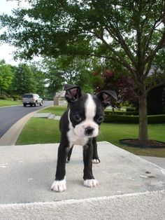 GAHHH this is what my dog looked like as a pup <3 <3