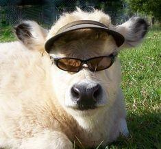 Very interesting post: TOP 44 Funny Animals Pics.сom lot of interesting things on Funny Animals. Cute Baby Cow, Baby Cows, Cute Cows, Cute Babies, Cute Little Animals, Cute Funny Animals, Funny Animal Pictures, Cute Pictures, Fluffy Cows