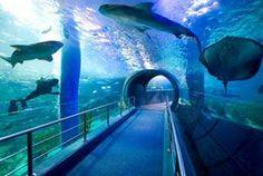 Melbourne Aquarium Victoria Australia
