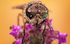 ♥ - water drops, flower, dew, wet, fly, pink, macro, insect
