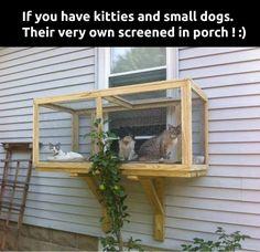 Outdoor perch for indoor cats