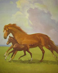 Vintage  Wesley Dennis Horse Print - Schooling Her Young One - Large Size 1950s - Great to Frame via Etsy