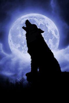 Full moon night 500 Schmidt