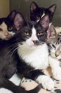 Dozens Of Heartwarming Cat Adoption Portraits