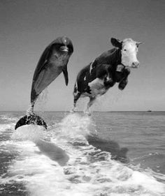 Funny Animal Pictures - View our collection of cute and funny pet videos and pics. New funny animal pictures and videos submitted daily. Writing Pictures, Picture Writing Prompts, Picture Prompt, Photo Humour, Animal Pictures, Funny Pictures, Random Pictures, Cow Pictures, Funny Animals