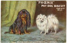 POSTCARD BRITISH ADVERTISING PHOENIX DOG BISCUITS