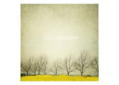 Vintage Landscape photography. Mustard field. winter trees. gray sky. yellow and gray art.branches. minimalist decor. branches. by ShannonClarkPhotoArt on Etsy https://www.etsy.com/listing/127393751/vintage-landscape-photography-mustard