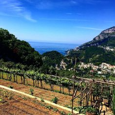 | scorci di costiera amalfitana |  #ravello #villacimbrone #igerscampania #igerssalerno #igersitalia #volgoitalia #sky #sun #remember #panoramic #panoramicview #picture #instagram #travel #travelblogger #paradise #instagramers #like4like #like4follow #home #homemade #openeyes #beautifuldestinations  #world #italy #mik #top #1  by mik_87
