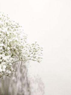 New wall paper white paisagem Ideas White Wallpaper, Screen Wallpaper, Flower Wallpaper, Flower Backgrounds, Photo Backgrounds, Wallpaper Backgrounds, Flower Aesthetic, White Aesthetic, Aesthetic Backgrounds