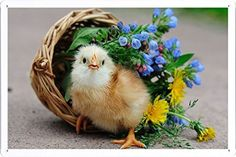 cats in baskets with flowers on their heads - Google Search