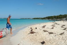 Allan's Cay, Bahamas - iguanas everywhere.  Been there and fed the iguanas awesome experience!!!