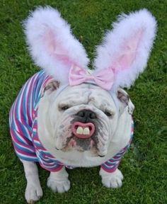 My pet animal rabbit essay