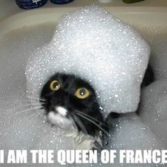 Marie Antoinette lmaoooo... and she doesn't look that angry.