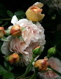 http://gypsypurple.blogspot.com/2010/05/garden-finds-garden-of-susan-serra.html