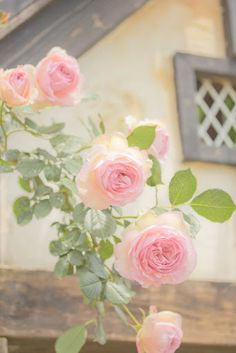 Roses-how gorgeous, so delicate and soft looking. God is beautiful.