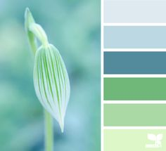 Nature Tones: icy blue, light blue, cadet blue, moss green, pastel grey green, pale tea green (Perfect calming hues for a bathroom or sunroom)