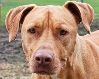 Urge Commerce City's Chief of Police Chuck Saunier to take appropriate measures against the cops who murdered this pit bull and to ensure officers treat animals with care.  http://www.thepetitionsite.com/takeaction/991/087/798/