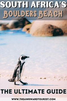 Planning a trip to South Africa? Check out this guide to seeing the penguins in Cape Town, South Africa. Find out where to see them and how you can help contribute to the conservation of the National Park. #CapeTown #SouthAfrica | Cape Town South Africa Penguins Beach | Penguins in Cape Town | African Penguins South Africa | Best things to do in Cape Town | Cape Town Travel Guide | Places to Visit in Cape Town | Cape Town South Africa travel things to do | - Tourist Places  IMAGES, GIF, ANIMATED GIF, WALLPAPER, STICKER FOR WHATSAPP & FACEBOOK