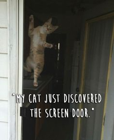 The Spider-Cat. | 23 Really Weird Things Cats Actually Do