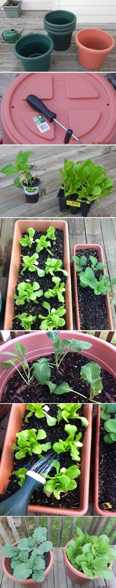 Grow a Chemical-Free Vegetable Container Garden