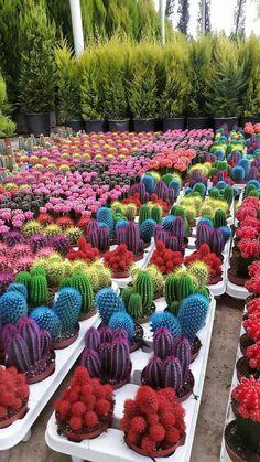 Photo de  Seven Colors of life