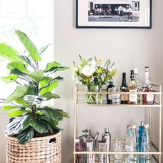 West elm bar cart + fiddle leaf plant