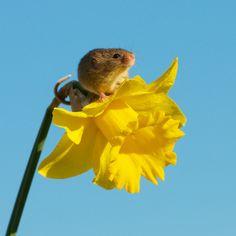 Photograph Springtime Mouse by Matt Binstead on 500px