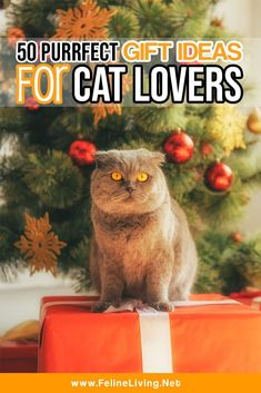 Purrfect gifts for cat lovers in your life! These are the most unique cat lovers gift ideas. Pet Gifts, Cat Lover Gifts, Cat Lovers, Lovers Gift, Crazy Cat Lady, Crazy Cats, Kitten Care, Unique Cats, Cat Accessories