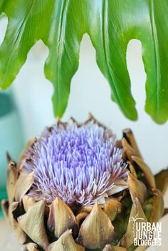 JOELIX.com | Urban Jungle Bloggers: Plants & Flowers