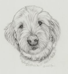Custom Dog portrait Pet portrait in graphite by PatouPetPortraits Labradoodle
