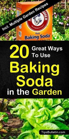 Find out how to best use baking soda in the garden and for your plants. Sprinkled over vegetables and plants, baking soda is a great natural remedy for pest control. Includes a variety of worm, gnats and ants repellent recipes.