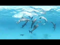 Swim with Dolphins!  Video works with mouse control on web browser. iPads must use the Youtube App for 360. Not for Google Cardboard