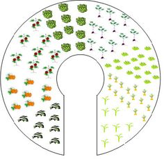 keyhole garden permaculture - Google Search