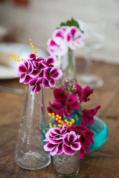 Colourful Pelargoniums with Mimosa.