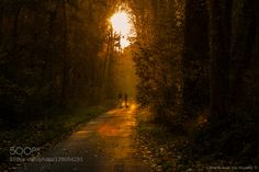 Autumn Walk by StphaneDeMarco. Please Like http://fb.me/go4photos and Follow @go4fotos Thank You. :-)