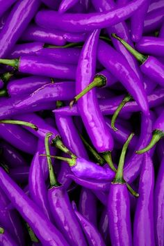 purple peppers that maybe Peter Piper picked! plants