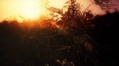 low bright sun - Google Search African Sunset, Cloud 9, Bright, Celestial, Google Search
