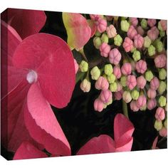 Dean Uhlinger Hydrangea Study Gallery-Wrapped Canvas, Size: 24 x 32, Green
