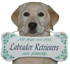 Labrador Retrievers #labradorretriever