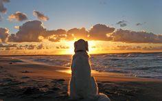 Dog on Beach Check more at http://hdwallpaperfx.com/dog-on-beach/