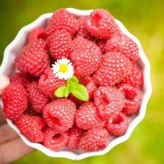 What everyone needs to know about fructose #sugarfree #happysugarhabits http://happysugarhabits.com/what-everyone-needs-to-know-about-fructose/