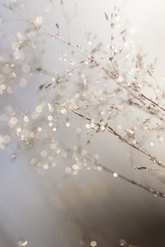 ice melting - water droplets on the delicate wispy grass – you can almost feel it blowing in the wind Effektive - Flowers Wallpaper, Deco Floral, Water Droplets, White Aesthetic, Belle Photo, Nature Photography, Summer Photography, Abstract Photography, Beautiful Pictures