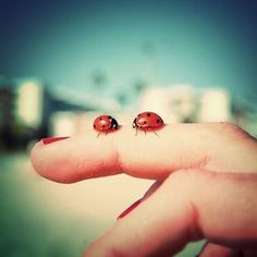 I love lady bugs:) I think they are good luck. Lady Bug, Le Jolie, Crazy Life, Love Bugs, Cool Stuff, Girly Stuff, Make Me Smile, Find Image, In This Moment