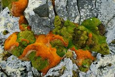 Very cool moss and lichen growing around these rocks