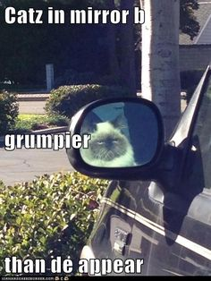 Cats in mirror are grumpier than they appear! #carmeme